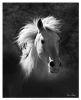 Horse Portrait V Fine Art Print
