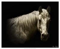 Horse Portrait VI Fine Art Print