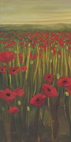 Red Poppies in Field I Fine Art Print