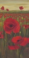 Red Poppies in Field II Fine Art Print