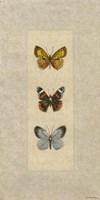 Butterfly Trio II Framed Print