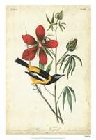 Audubon Bird & Botanical I Framed Print