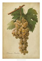 Vintage Vines II Framed Print