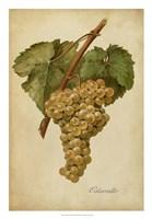 Vintage Vines III Framed Print