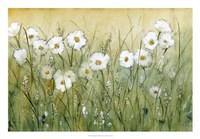 Daisy Spring II Framed Print