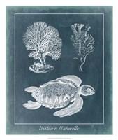 Azure Sea Turtle Study I Framed Print