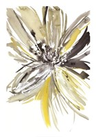A Sunny Bloom Fine Art Print