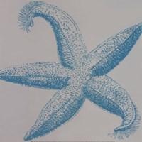 Sea Stars I Framed Print