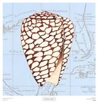 Seashore Gifts I Fine Art Print