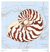 Seashore Gifts II Fine Art Print