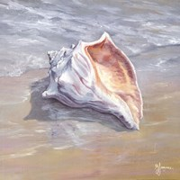 Whelk Fine Art Print