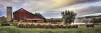 Hay Harvest Fine Art Print