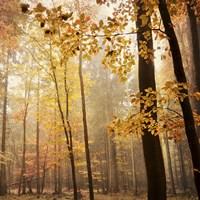 Autumn Blush Fine Art Print
