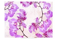 Fluttering Orchid II Fine Art Print