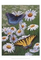 Butterflies & Daisies Fine Art Print