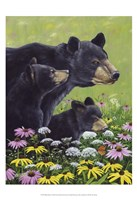 Black Bears Fine Art Print
