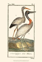 Buffon Cranes & Herons I Fine Art Print