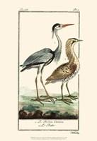 Buffon Cranes & Herons III Fine Art Print