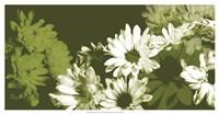 Daisy Garden I Framed Print