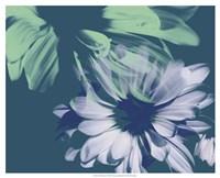 Teal Bloom I Fine Art Print