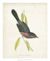 Dartford Warbler Fine Art Print