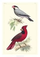 Lemaire Birds I Fine Art Print