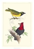 Lemaire Birds II Fine Art Print
