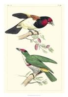 Lemaire Birds III Fine Art Print
