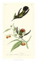 Lemaire Hummingbirds III Fine Art Print