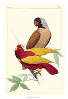 Lemaire Parrots II Fine Art Print
