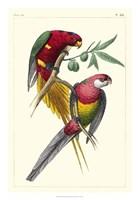 Lemaire Parrots III Fine Art Print
