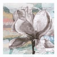 Pastel Magnolias I Framed Print