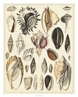 Seashell Display Fine Art Print