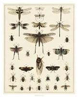 Dragonfly Display Fine Art Print