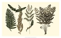 Fern Leaf Folio I Fine Art Print
