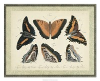 Bookplate Butterflies Trio I Framed Print
