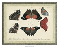 Bookplate Butterflies Trio II Framed Print