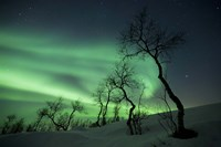 Northern Lights in the arctic wilderness, Nordland, Norway Fine Art Print