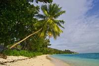 Leaning palm. Anse-Source D'Argent Beach, Seychelles, Africa Fine Art Print