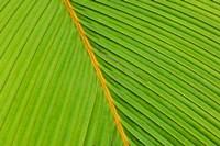 Flora, Palm Frond on Fregate Island, Seychelles Fine Art Print