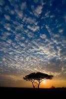 Africa. Tanzania. Sunrise in Serengeti NP. Fine Art Print
