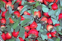 China, Chongqing, Strawberries in fruit market Fine Art Print