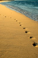 Footprints in the Sand, Mauritius, Africa Fine Art Print