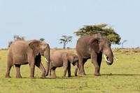 Three African Elephants, Maasai Mara, Kenya Fine Art Print