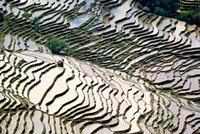 Flooded Bada Rice Terraces, Yuanyang County, Yunnan Province, China Fine Art Print