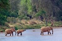 African Elephant crossing, Samburu Game Reserve, Kenya Fine Art Print