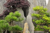 Bao's Family Garden, Huangshan, China Fine Art Print