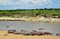 Hippopotamus, Mara River, Serengeti NP, Tanzania Fine Art Print