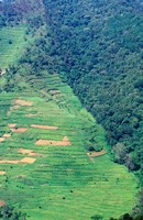 Abutting Agricultural Development, Uganda Fine Art Print