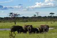 Elephant, Zimbabwe Fine Art Print